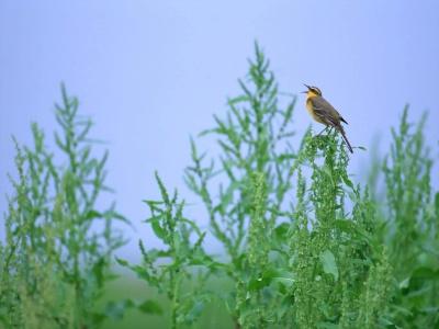 Bird Mix 030
