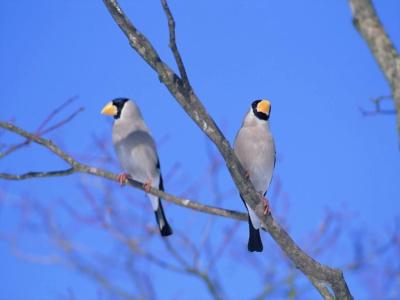 Bird Mix 072