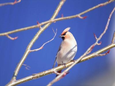 Bird Mix 073