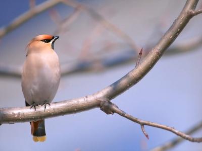 Bird Mix 074