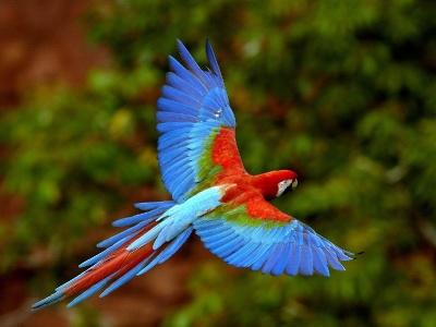 Parrot 06