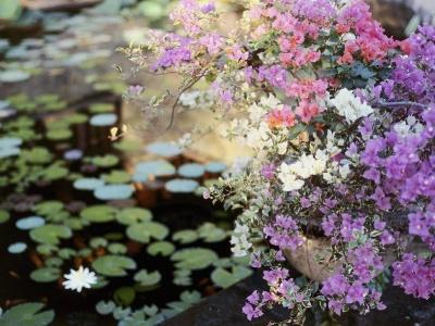 Water Garden Bali