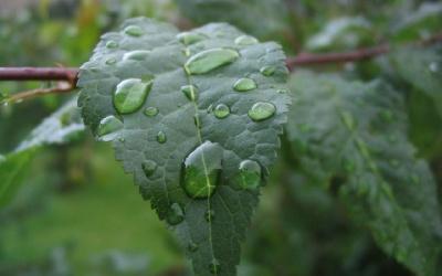 Green leaf one leaf