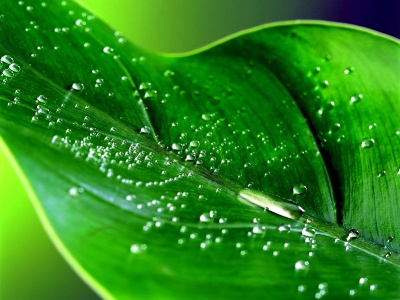 Green leaf water drop 10