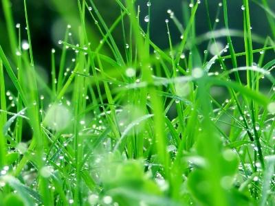 Green leaf water drop 11