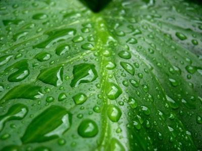 Green leaf water drop 12