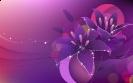 Flowers Design 01