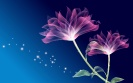 Flowers Design 21