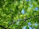 Bird Mix 001