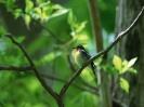 Bird Mix 002