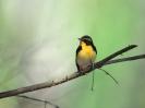 Bird Mix 003