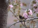 Bird Mix 004