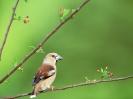 Bird Mix 005