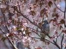 Bird Mix 006