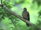 Bird Mix 009