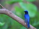 Bird Mix 010