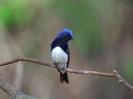 Bird Mix 011