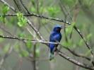 Bird Mix 012