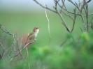 Bird Mix 016