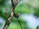 Bird Mix 018
