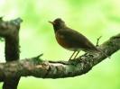 Bird Mix 019