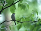 Bird Mix 020