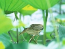 Bird Mix 050