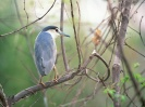 Bird Mix 053