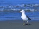Bird Mix 058