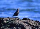 Bird Mix 060
