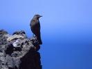 Bird Mix 061