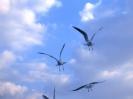 Bird Mix 068