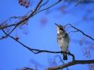 Birds Wallpapers :: Bird Mix 079