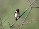 Bird Mix 081