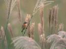 Bird Mix 083