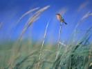 Bird Mix 084