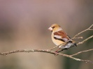 Bird Mix 086