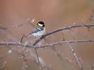Bird Mix 087