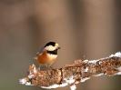 Bird Mix 090