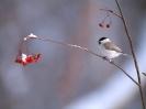 Bird Mix 091