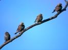Birds Wallpapers :: Bird Mix 116
