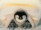 Penguin 04