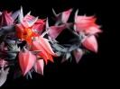 Beautiful Flower 02