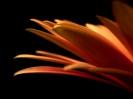 Beautiful Flower 03