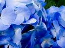Beautiful Flower 06