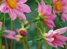 Beautiful Flower 13