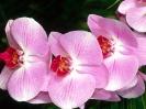 Beautiful Flower 14