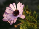Beautiful Flower 15