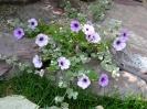 Beautiful Flower 16