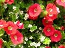 Beautiful Flower 17